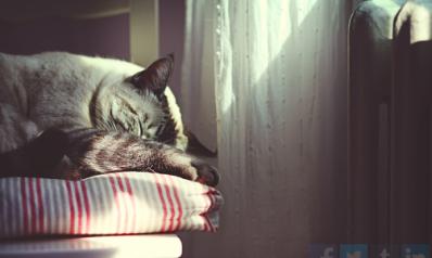 Aménager un espace pour son animal domestique : nos conseils