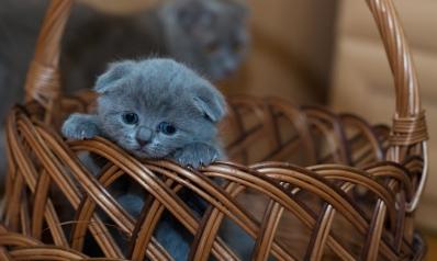 3 DIY pour bien accueillir votre nouveau chaton à  la maison