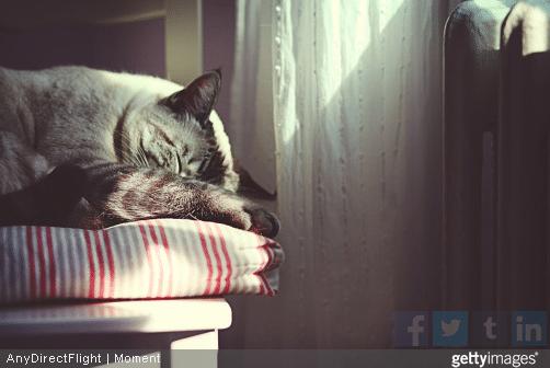 Les chats aiment dormir en hauteur.